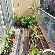 有钱人现在除了养锦鲤,还喜欢在花园里种菜