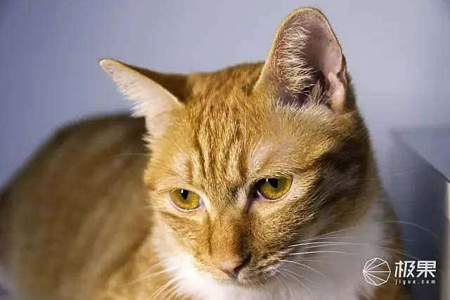 护眼壁纸 可爱猫咪
