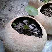 植物已种好,不要钱的花肥陌陌送给你!