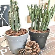 一兜糖众测|拂叶FEUILLE 室内盆景植物——手残星人也能养好植物