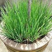 绿植:不仅貌美如花,还能省钱养家