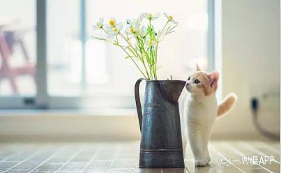 小件易更换的物品 客厅中可以摆放清新小花瓶,桌布换成浅色,海洋气息