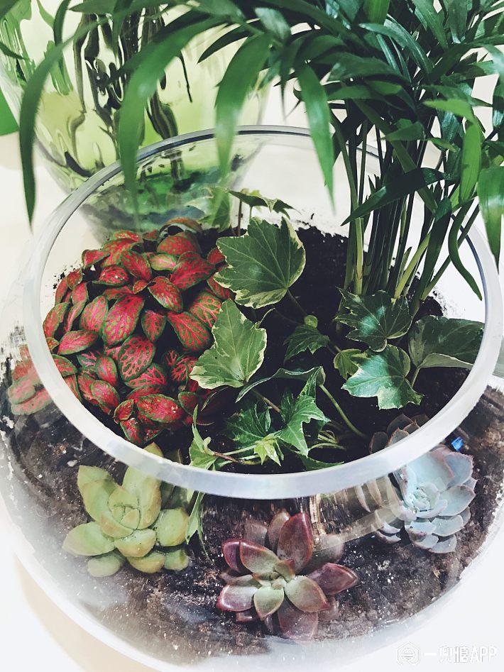 废物利用,巧养花