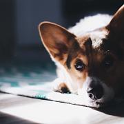 【壹·加 干货分享】地毯日常清洁