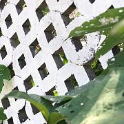 给院子换了个白墙