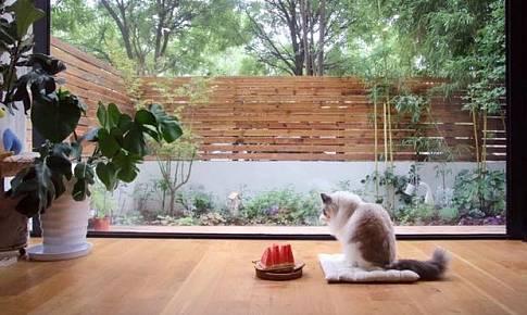 家就是,一猫二人三餐四季