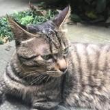 水泥灰的猫丶